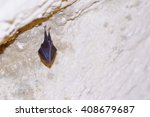 Bat Covered By Wings  Hanging...