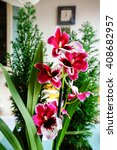 Small photo of Mitonia, abbreviated Milt. Beautiful orchid and cypress in background. Home decoration.