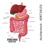 the part of internal human... | Shutterstock .eps vector #408718153