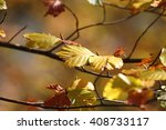 colors of autumn  leaves with... | Shutterstock . vector #408733117