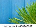 fresh young green barley grass... | Shutterstock . vector #408740287