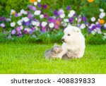 Stock photo puppy with kittens on the green grass 408839833