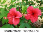 blur red hibiscus flower | Shutterstock . vector #408951673