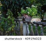 Cat Resting In Italian Garden