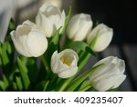 Bouqet Of White Tulips