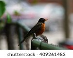 robin on a chain link fence | Shutterstock . vector #409261483
