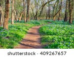 Hiking Trail Through Spring...