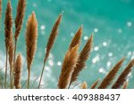 pampas grass in front of the... | Shutterstock . vector #409388437