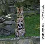leptailurus serval  | Shutterstock . vector #409468633
