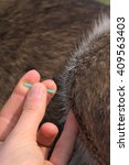 Small photo of Acupuncture of a dog's knee