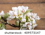 photo of white blooming flowers ...   Shutterstock . vector #409573147
