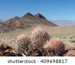 extreme depth of field photo of ... | Shutterstock . vector #409698817
