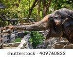 Elephant In Zoo.