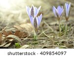 Macro Photo Of The Four Of...