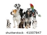Stock photo group of pets standing in front of white background studio shot 41007847