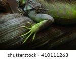 foot of the green iguana ... | Shutterstock . vector #410111263
