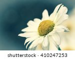 close up view of a daisy flower | Shutterstock . vector #410247253