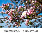 apple branch | Shutterstock . vector #410259463