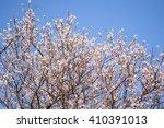 spring white blossom against... | Shutterstock . vector #410391013