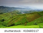 Landscape View Of Shallot...