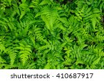 Great Green Bush Of Fern In Th...