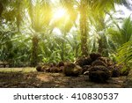 palm oil plantation and morning ... | Shutterstock . vector #410830537
