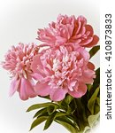 peony flowers | Shutterstock . vector #410873833