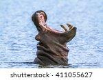 Hippopotamus In Kruger Nationa...