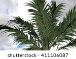 palm tree alexander... | Shutterstock . vector #411106087