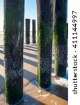 Small photo of Closeup of the wooden breakwater poles at the Dutch North Sea coast at low tide. The wooden poles are covered with algae and acorn barnacles.