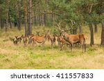 Deer Herd In The Forest With...