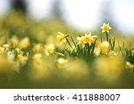 Field Of Daffodils In The Rain
