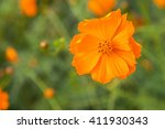 close up of cosmos flowers ... | Shutterstock . vector #411930343