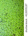 Small photo of Natural green azolla background