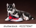 Stock photo cute puppy siberian husky with red sneakers 412173367