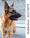 german shepherd  german...   Shutterstock . vector #412176073