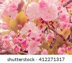 spring bloom  sakura   Shutterstock . vector #412271317