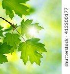 green leaves on the summer...   Shutterstock . vector #412300177
