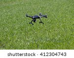 Drone Flying Above Green Field.