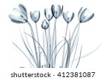x ray image of a flower ... | Shutterstock . vector #412381087