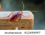 cockroach on wooden  | Shutterstock . vector #412494997
