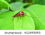 cockroach on green leaf | Shutterstock . vector #412495093