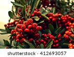Mohave Pyracantha  Firethorn