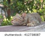 Cat  Grey Cat Sleeping With Hi...