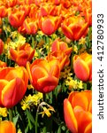 red tulips in flower field | Shutterstock . vector #412780933