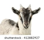 Baby Goats On An Isolated Whit...