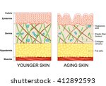 younger skin and aging skin.... | Shutterstock . vector #412892593