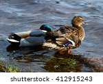birds and animals in wildlife.... | Shutterstock . vector #412915243