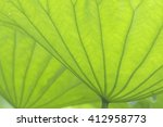 Leaves In Photosynthesis