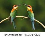pair of chestnut headed bee...   Shutterstock . vector #413017327